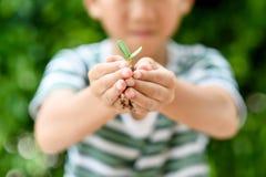 Jeune jeune plante dans de petites mains Photo libre de droits