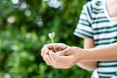 Jeune jeune plante dans de petites mains Images stock