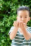 Jeune jeune plante dans de petites mains Image stock