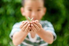 Jeune jeune plante dans de petites mains Images libres de droits