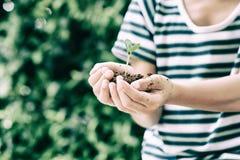 Jeune jeune plante dans de petites mains Photos libres de droits