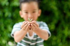 Jeune jeune plante dans de petites mains Photographie stock libre de droits
