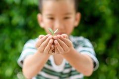 Jeune jeune plante dans de petites mains Photo stock