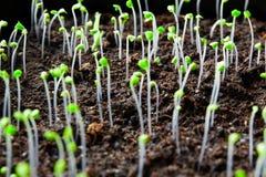 Jeunes plantes d'usine Photographie stock
