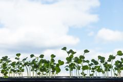 Jeune jeune plante verte contre le ciel Photo stock