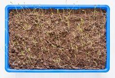 Jeune jeune plante verte sur le sol dans un pot Photographie stock libre de droits