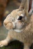 Jeune lapin curieux Image stock