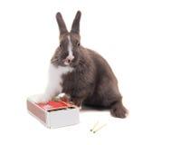 Jeune lapin nain léché sur une boîte de matchs D'isolement sur le blanc Photo stock