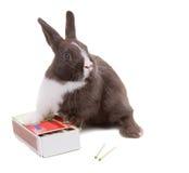 Jeune lapin nain sur une boîte de matchs D'isolement sur le backgr blanc Photos stock