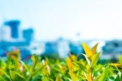 Jeune leafdans la ville photo libre de droits