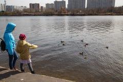 Jeune mère avec sa fille et canards. Images libres de droits