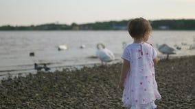 Jeune mère avec ses filles de bébé alimentant le cygne et les petits canetons oiseaux pain à une rivière portant la robe pointill clips vidéos