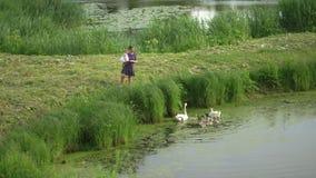 Jeune mère avec son cygne de alimentation de fille de bébé et petits canetons à un étang vert de parc portant la robe pointillée  banque de vidéos
