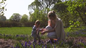 Jeune m?re jouant et parlant avec un fils de b?b? gar?on sur une jacinthe de raisin de champ de muscari au printemps - jour ensol banque de vidéos