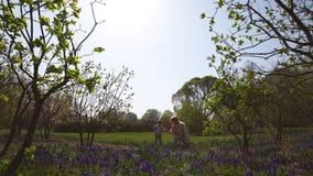 Jeune m?re marchant avec un fils de b?b? gar?on sur une jacinthe de raisin de champ de muscari au printemps - jour ensoleill? - banque de vidéos