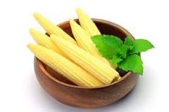 Jeune maïs Photos stock
