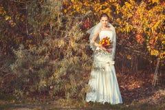Jeune mariée se tenant en parc d'automne Photos libres de droits