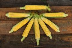 Jeune maturité de laiterie de maïs, variétés de nourriture développées à la ferme écologique photo libre de droits