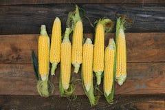 Jeune maturité de laiterie de maïs, variétés de nourriture développées à une ferme écologique photographie stock libre de droits
