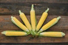 Jeune maturité de laiterie de maïs, variétés de nourriture développées à une ferme écologique photos libres de droits