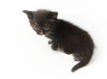 Jeune minou noir d'une manière amusante Photos stock
