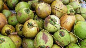 Jeune noix de coco Photographie stock libre de droits
