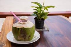 Jeune noix de coco Image stock