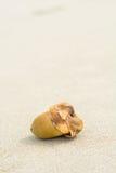 Jeune noix de coco sur le sable images stock
