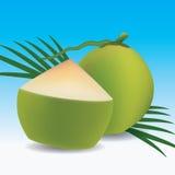Jeune noix de coco verte illustration libre de droits