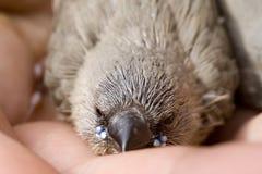 Jeune oiseau Photo libre de droits