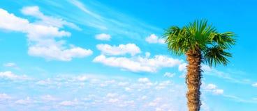 Jeune palmier contre le ciel cloudly bleu L'espace pour le texte Vacances en mer tropiques Tourisme de repos d'été images stock