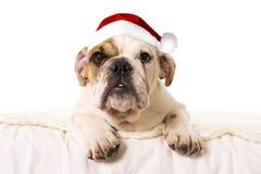 Jeune petit chien de petit animal de bouledogue français se trouvant sur le lit à la maison avec le chapeau de Santa de Noël Image stock