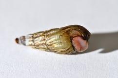 Jeune petit escargot Photographie stock