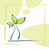 Jeune petite plante de centrale Images libres de droits