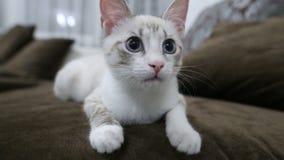 Jeune plan rapproché de chat de museau et d'expressions du visage banque de vidéos
