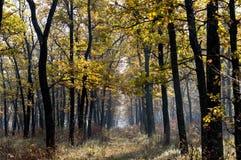 Jeune plantation de chêne dans le fal Photos stock