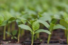 Jeune plante Images libres de droits
