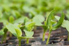 Jeune plante Photographie stock