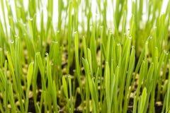 Jeune plante Photos stock