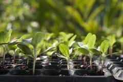 Jeune plante Photographie stock libre de droits