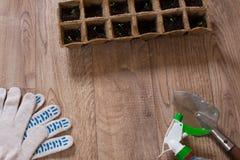 Jeune plante Images stock