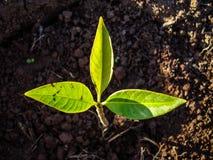 Jeune plante d'arbre Images libres de droits