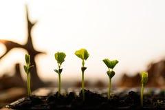Jeune plante d'usine photos stock