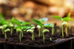 Jeune plante d'usine Images libres de droits