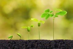 Jeune plante d'usine Photo libre de droits