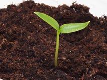 Jeune plante dans un pot Images stock