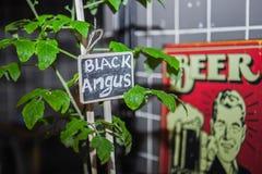 Jeune plante de tomate Photos libres de droits