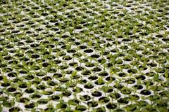 Jeune plante en serre chaude Photographie stock libre de droits