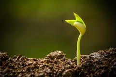 Jeune plante et élevage Image stock