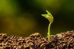 Jeune plante et élevage Photo libre de droits